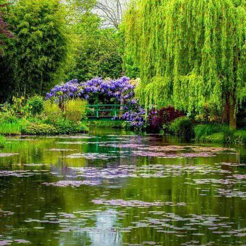 Bir yapıt olarak Monet bahçesi